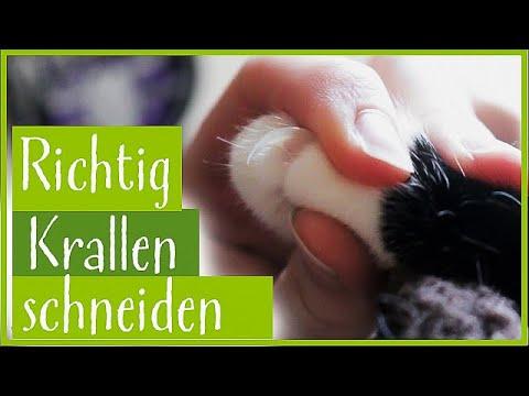Anleitung zum entspannten Katzenkrallen schneiden
