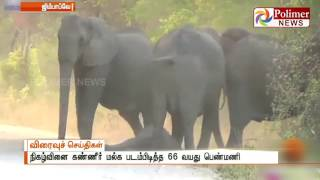A Emotional Video showing Baby elephant rescued by his Family | Polimer News