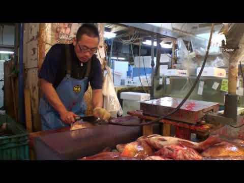 4 Giappone: Il mercato del pesce a Tsukiji