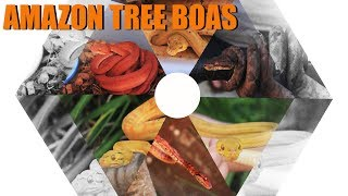 Episode 15 (Part 1) - Amazon Tree Boas!!! Not as aggro as one might think!