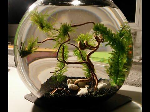 Aquascape Kugelaquarium