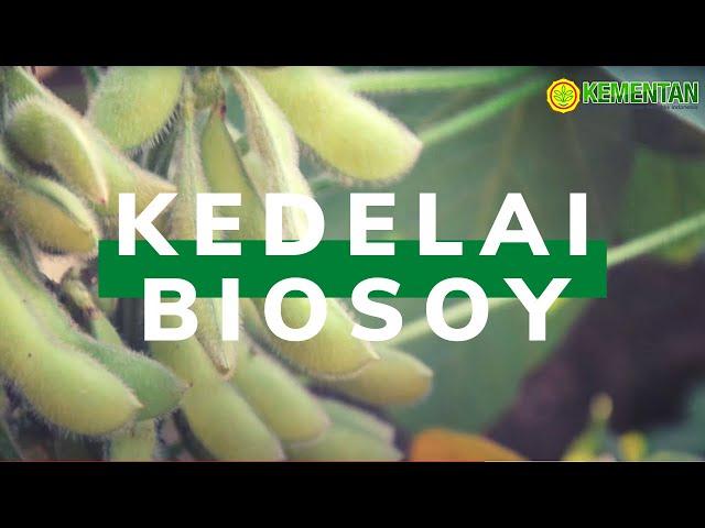 Kedelai Ini Miliki Biji Besar dan Banyak (Biosoy 1&2) – Vlog!