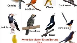 Kompilasi Masteran Kicau Burung Dan Suara Kricikan Air Durasi Panjang