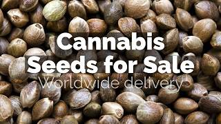 Cannabis Seeds for sale - the best weed seeds for sale