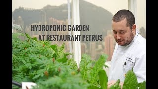 Island Shangri-La, Hong Kong Offers Fresh Ingredients From On-Property Hydroponic Garden