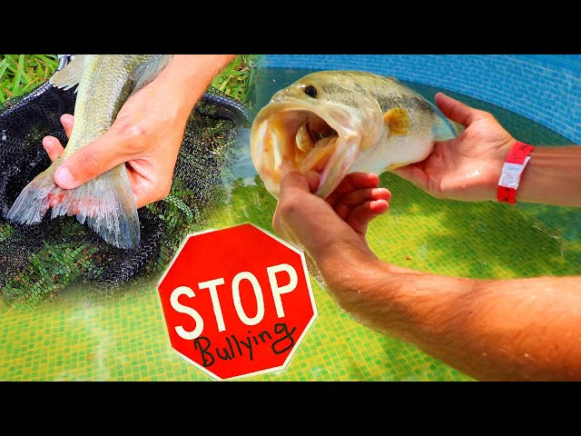 Relocating CRAZY BULLY FISH TO Isolated POND!! ** BEWARE **