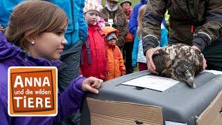 Gambar cover Knochen für den Bartgeier (Doku) | Reportage für Kinder | Anna und die wilden Tiere