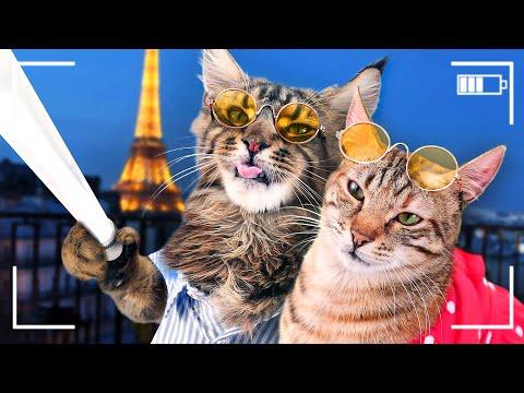 CAT's GOT TALENT (видео)