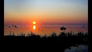 Прощальные летние закаты на балтийском взморье Хаверси в Эстонии с перелётными птицами :)