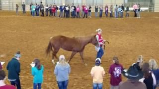 4-H Horse Juding  Jr Halter Mares