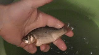 Живец для рыбалки подольск
