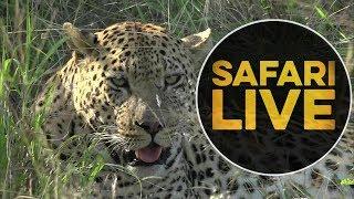 safariLIVE - Sunset Safari - May, 23. 2018
