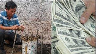 Long An: Kiếm gần $5,000 mỗi tháng nhờ lập trang trại nuôi… ruồi