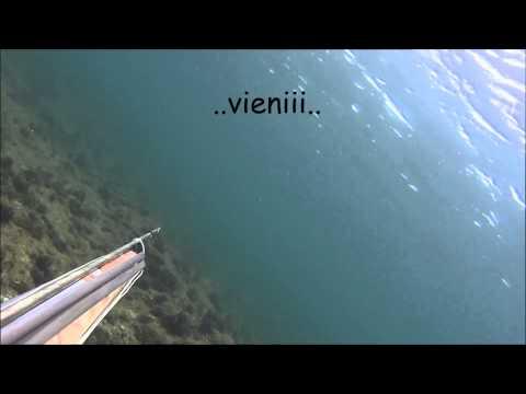 La pesca sul fiume anyuy e i suoi afflussi