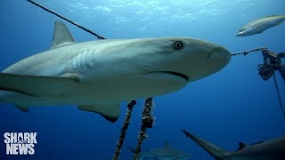 Sharks Are Living A Lot Longer Than We Thought | Shark News