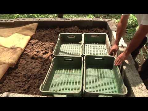 A que es actuado las lombrices vivas en kale a