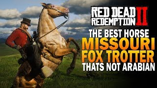 The Best Horse That's NOT An Arabian! The Missouri Fox Trotter! Red Dead Redemption 2 Horses [RDR2]
