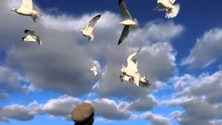 Steve Forbert | Seagulls at the Carousel