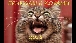 Смешные Видео с Животными 😂 Подборка Самых Лучших Приколов С Котами⚡# 3
