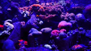 Relaxing Aquiarium, coral. atmospheric ambience HD. Loop video