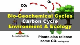 What is Carbon Cycle | Environment & Ecology