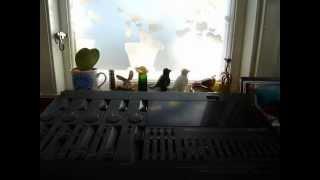 Can't Stop Now - Rambling Nicholas Heron