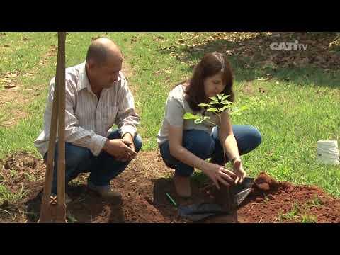 Aprenda como plantar uma muda de árvore no solo