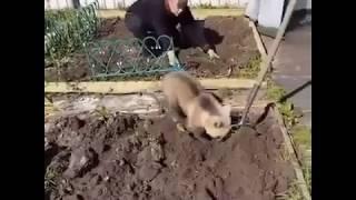 Медвежонок Помошник