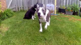 OLD DOGS BEHAVING BADLY