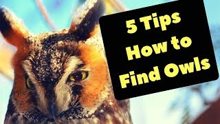 How To Find Owls | Birdwatching