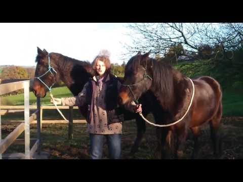 Anam Cara Horses<br />Equine Facilitated Therapy