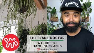 A Guide To Hanging Plants | The Plant Doctor