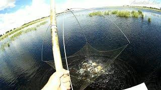 Законна ли ловля рыбы на паука