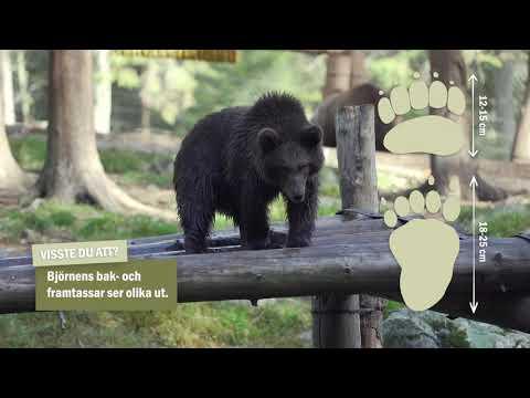 En kort film om björnen