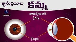 #మానవుని కన్ను: human eye in telugu : general science biology in telugu RRB,PC,SI  competitive exams