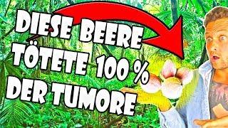 Laut Studie:Diese Beere tötete alle Tumore nach 4 Stunden bei Säugetieren