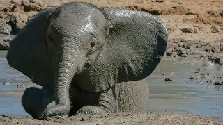 Baby Elephant Takes Her First Bath | BBC Earth