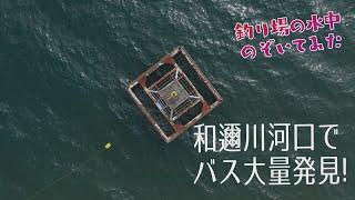 釣り場の水中のぞいてみた「和邇川鉄塔周辺編」