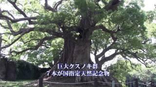 国指定天然記念物~藤崎台のクスノキ群