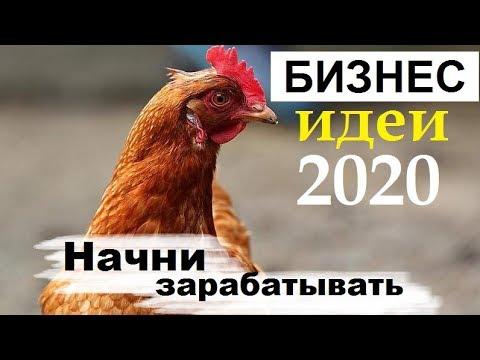 Выгодно ли содержать кур несушек? Бизнес идеи 2020 - куры несушки содержание, бизнес с нуля.