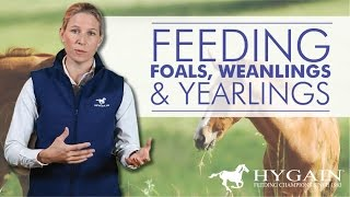 How to feed foals, weanlings and yearlings?