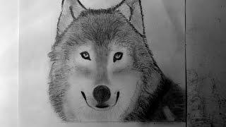 Comment Dessiner Un Loup самые лучшие видео