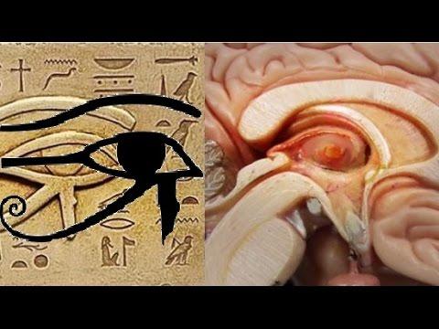 Число судьбы астрология