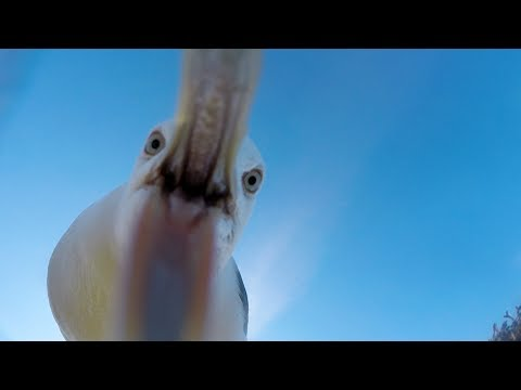 GoPro Awards: Seagull Theft – With Telemetry in 4K