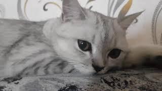 Как меняются зрачки у котов