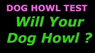 Dog Howl Test ~ Sounds To Make Your Dog Howl dog tv stimulation