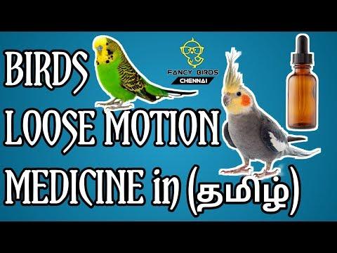 , title : 'Birds Loose Motion Medicine   Treatment   தமிழில்   fancy birds chennai