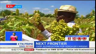 Siaya sorghum farmers rake in better produce: Next Frontier