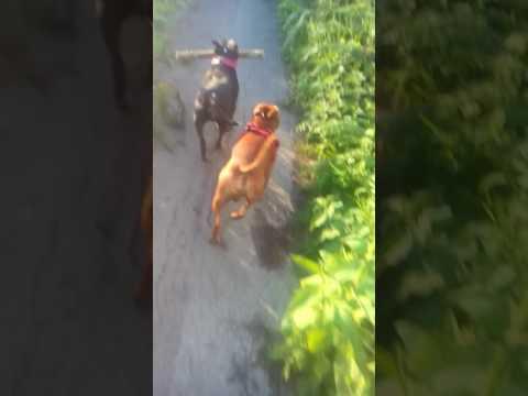 Dog work xxx
