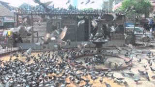 Dadar Kabutar Khana in Mumbai